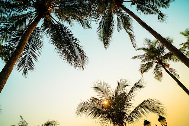 Schöne kokospalme mit sonnenuntergang
