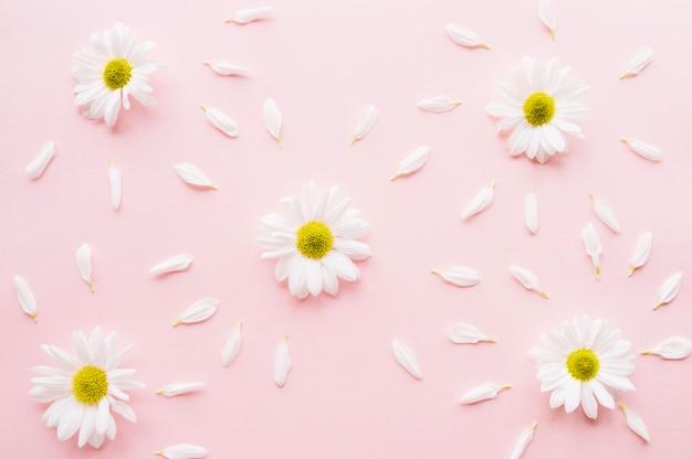 Schöne komposition von gänseblümchen von blütenblättern umgeben