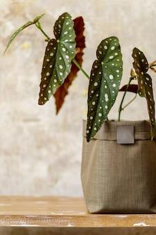 Schöne komposition zu hause mit holzbank, stilvolle pflanze in neutralem topf in stilvoller wohnkultur.