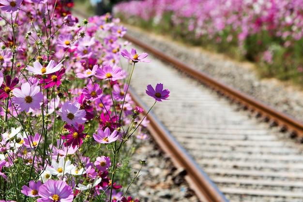 Schöne kosmosblumen auf der eisenbahn