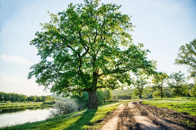 Schöne ländliche landschaft eine landstraße und eine riesige grüne baum große altertümliche eichenlandschaftsszene