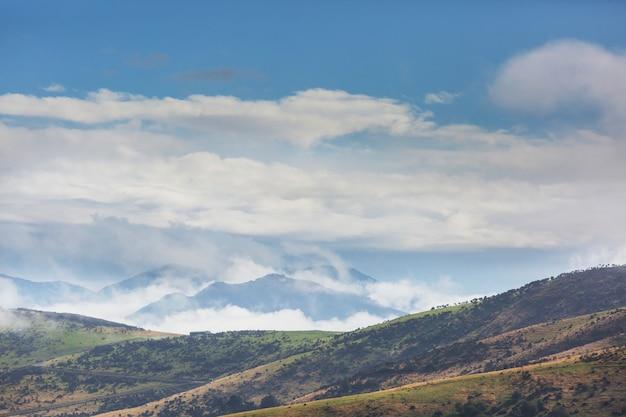 Schöne ländliche landschaft neuseelands - grüne hügel und bäume