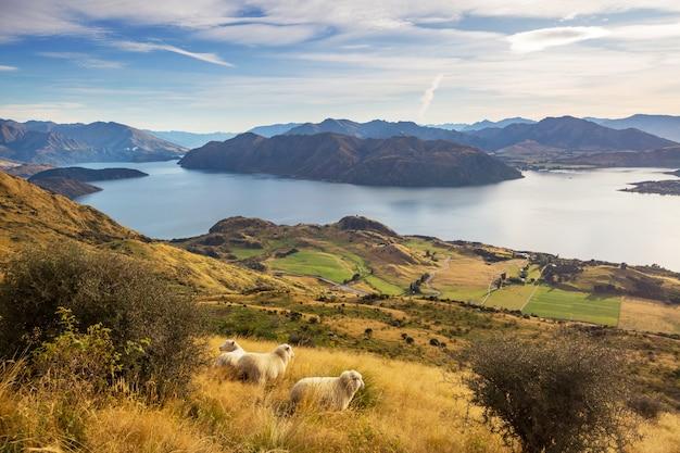 Schöne ländliche landschaften in neuseeland.
