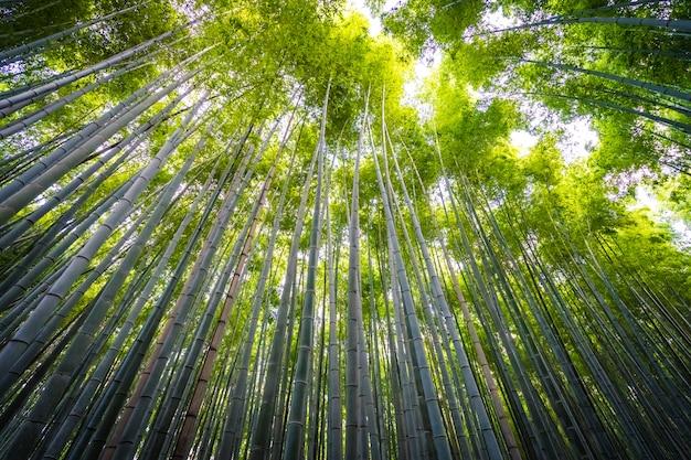 Schöne landschaft der bambushain im wald bei arashiyama kyoto