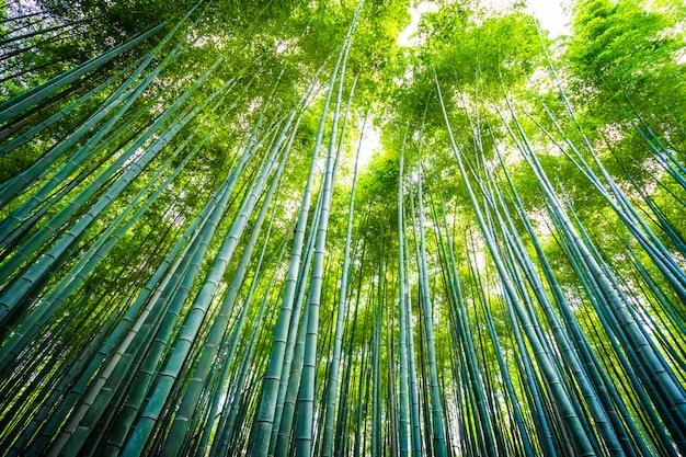 Schöne landschaft der bambuswaldung im wald bei arashiyama kyoto