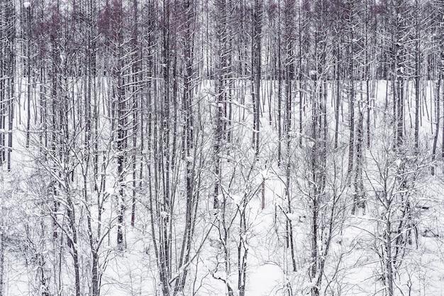Schöne landschaft der baumastgruppe im schneewinter