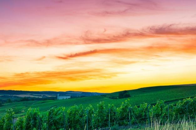 Schöne landschaft der champagner-weinberge in frankreich