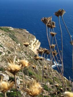 Schöne landschaft der felsigen klippen an der seeküste auf der insel filfla in malta