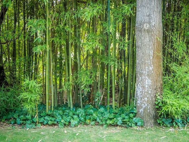 Schöne landschaft der grünen rasen in einem garten in lissabon, portugal