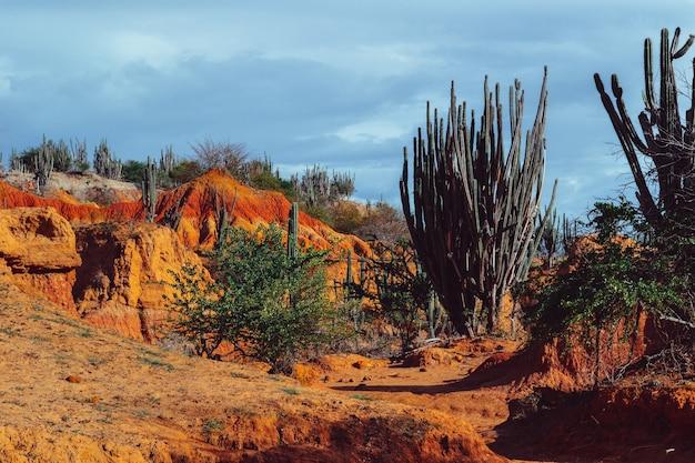 Schöne landschaft der tatacoa-wüste, kolumbien mit exotischen wildpflanzen auf den roten felsen