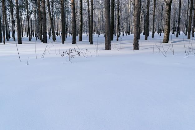 Schöne landschaft des blauen schnees im winterwald