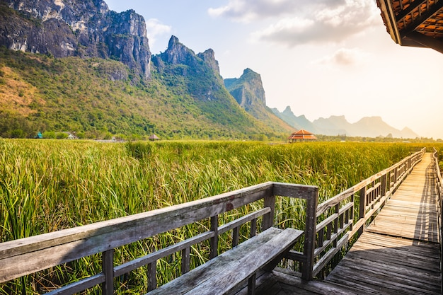Schöne landschaft des holzbrückegehwegs im sumpf mit rasenfläche mit blauem himmel