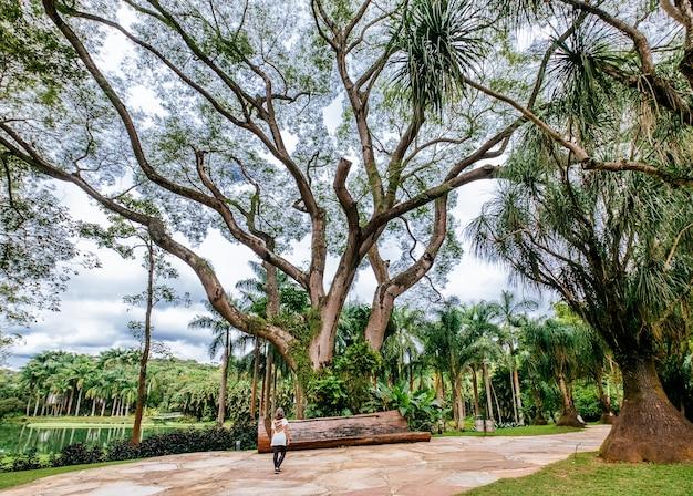 Schöne landschaft des mangal das garcas parks in der stadt belem in brasilien