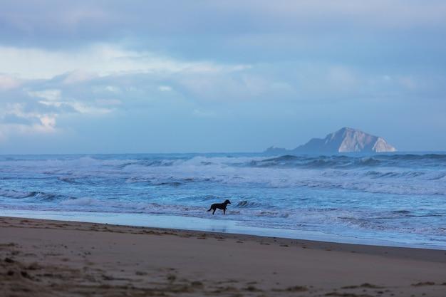 Schöne landschaft des ocean beach, neuseeland.
