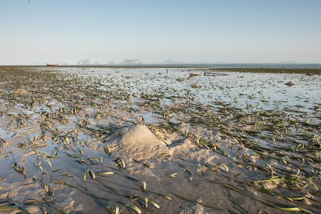 Schöne landschaft des ozeans und des strandes mit grünem seegras während ebbe