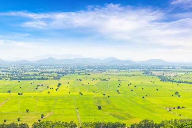 Schöne landschaft des reisgrünfeldes und des blauen himmels in thailand