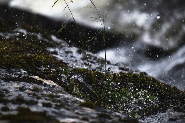 Schöne landschaft des schnees gemischt mit regen, der über die grünen pflanzen fällt