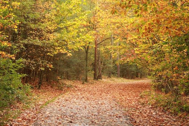 Schöne landschaft des weges durch die fallenden bäume im wald