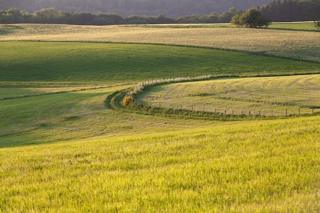 Schöne landschaft einer grünen wiese auf dem land in der eifel, deutschland