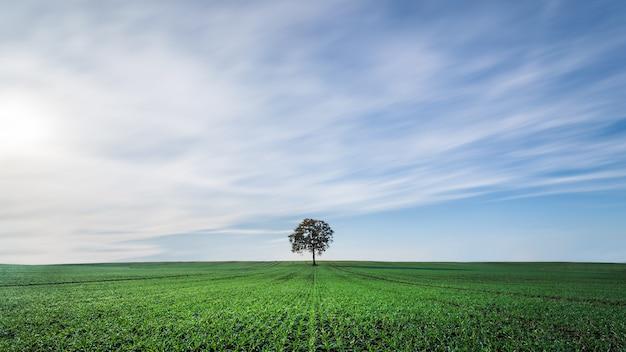 Schöne landschaft einer grünen wiese unter dem bewölkten himmel