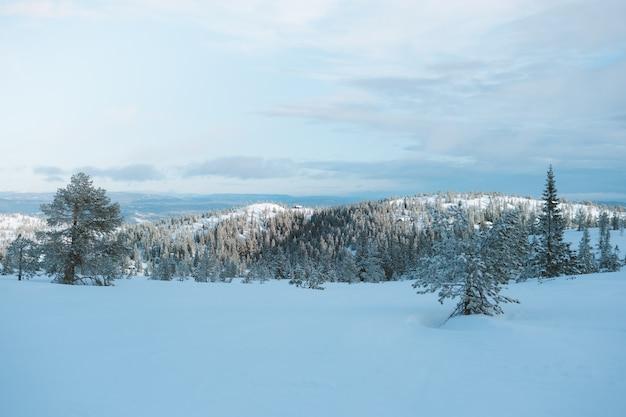 Schöne landschaft einer schneebedeckten gegend mit vielen grünen bäumen in norwegen