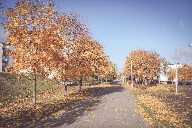 Schöne landschaft eines bürgersteigs, umgeben von herbstbäumen mit getrockneten blättern