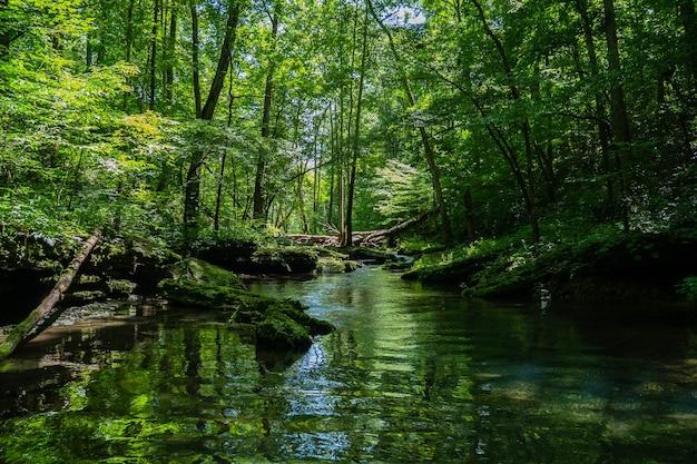 Schöne landschaft eines flusses, umgeben von grün in einem wald