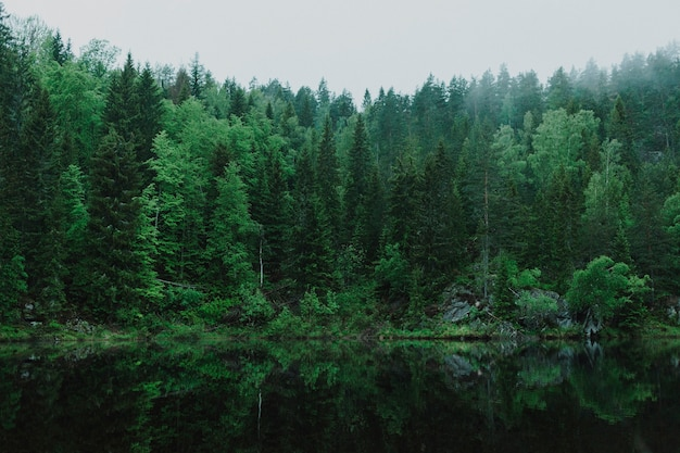 Schöne landschaft eines grünen waldes
