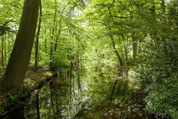 Schöne landschaft eines parks mit bäumen, die auf dem wasser reflektieren