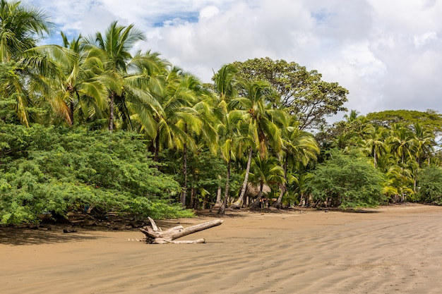 Schöne landschaft eines strandes voll von verschiedenen arten von grünen pflanzen in santa catalina, panama
