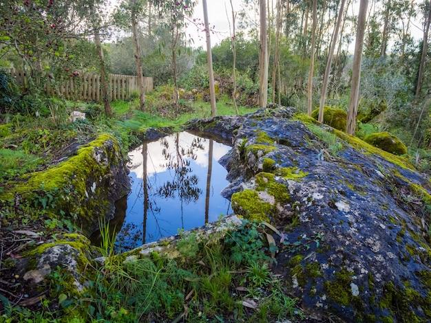 Schöne landschaft eines teiches nahe einem hügel, der mit moos in einem wald bedeckt wird