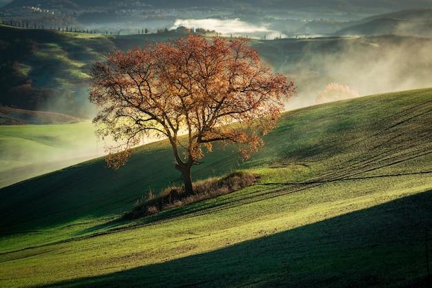 Schöne landschaft eines trockenen baumes auf einem grünen berg bedeckt mit nebel