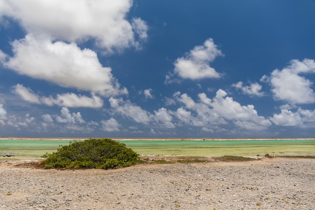 Schöne landschaft eines tropischen exotischen strandes in salzpfannen. bonaire, karibik