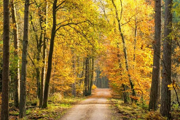 Schöne landschaft eines von hohen bäumen umgebenen weges in einem park tagsüber
