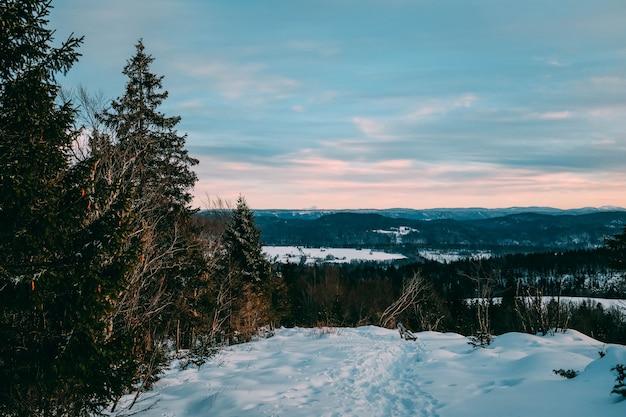 Schöne landschaft eines waldes bedeckt im schnee unter einem bewölkten himmel während des sonnenuntergangs