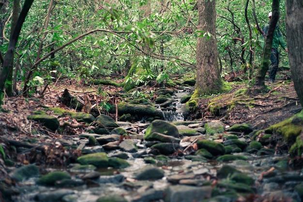 Schöne landschaft eines waldes mit einem fluss und moos auf felsen