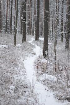 Schöne landschaft eines waldes mit vielen schneebedeckten bäumen