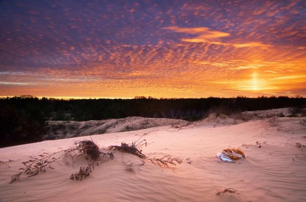 Schöne landschaft in der wüste. zusammensetzung der natur.