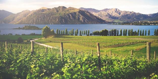 Schöne landschaft in neuseeland.