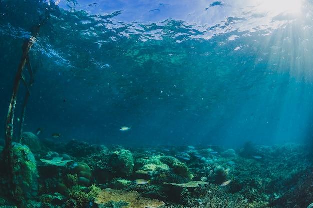 Schöne landschaft in unterwasser