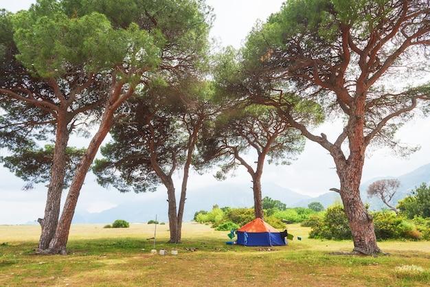 Schöne landschaft mit bäumen auf dem rasen auf bergen.