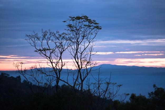 Schöne landschaft mit bäumen auf den bergen bei sonnenaufgang morgens.