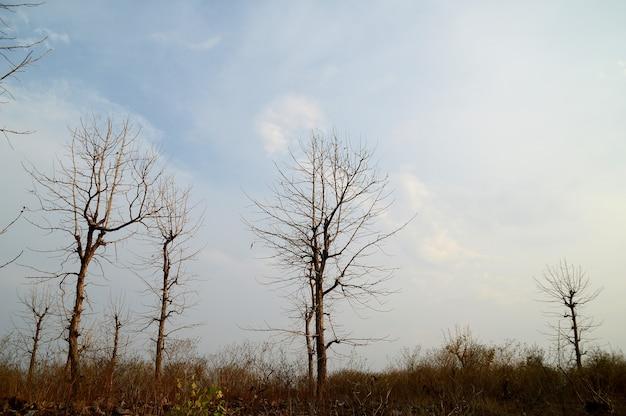 Schöne landschaft mit bäumen