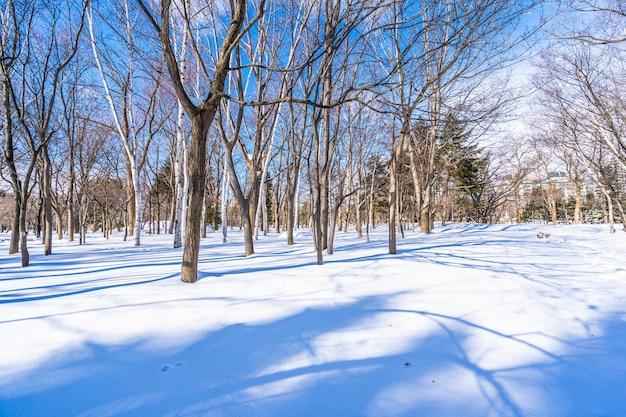 Schöne landschaft mit baum in der schneewintersaison