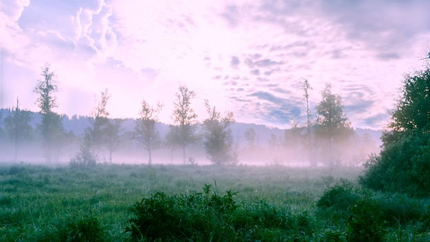 Schöne landschaft mit dämmerungsnebel und morgentau
