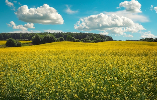 Schöne landschaft mit feld von gelbem raps (brassica napus l.) und blauem bewölktem himmel