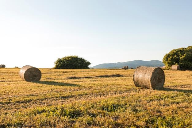 Schöne landschaft mit getrocknetem feld