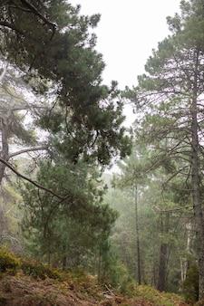 Schöne landschaft mit hohen bäumen