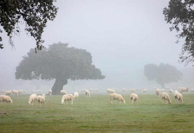 Schöne landschaft mit nebel