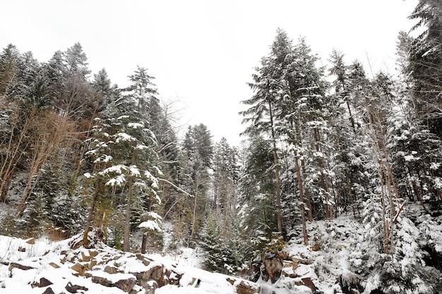 Schöne landschaft mit wald im resort am wintertag